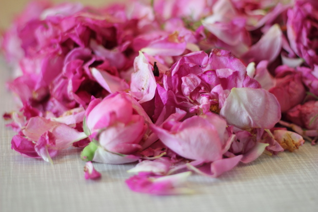 ruže za slatko
